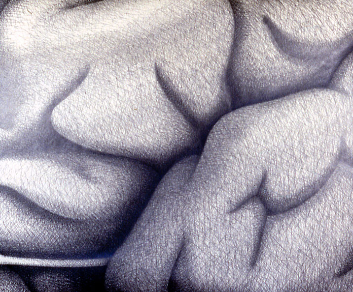 Drawings & Paintings - Brains Brains03